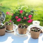 How To Grow The Best Beans For Sprouting