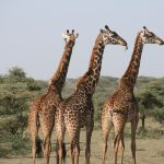 Ethical Safari Holiday With Ethical Safari Tanzania