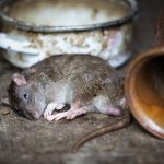 How Rodent Proofing Services Seattle Help
